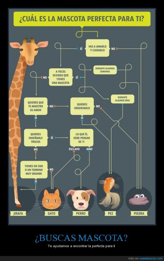 flow cart,gato,jirafa,mascota,perro,pez,piedra