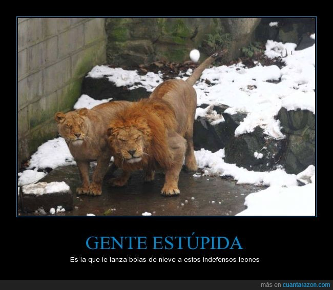 bola,frio,gente,leon,leona,leones,nieve,que asco de gente,tirar,zoo