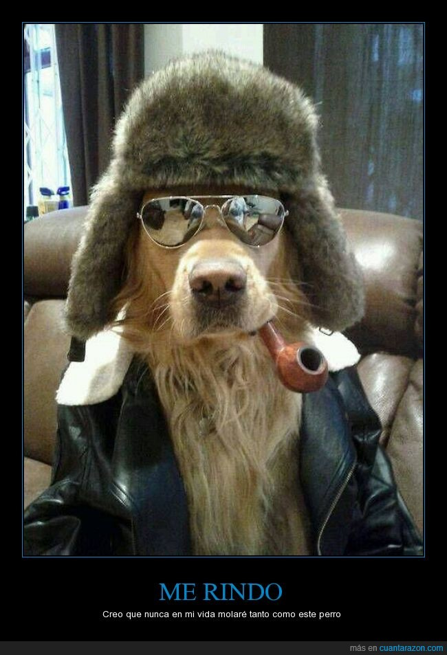 chaqueta,cuero,gafas,gorro,molar,perro,piel,pipa,swag