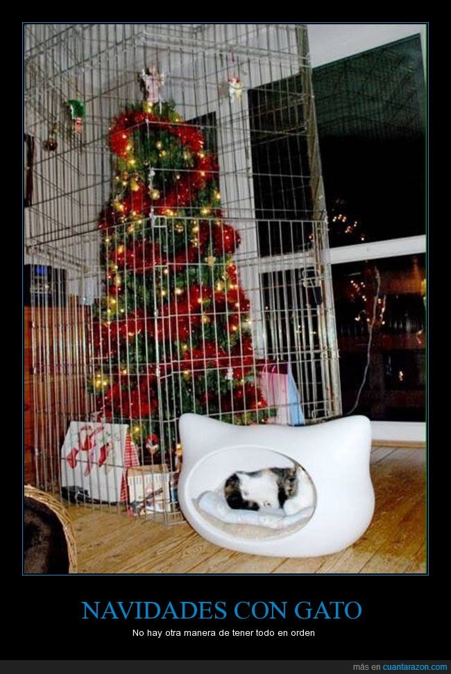 árbol,Gato,jaula,navidad,protección,reja,romper,tirar