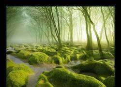 Enlace a Misteriosos bosques que te dan ganas de viajar