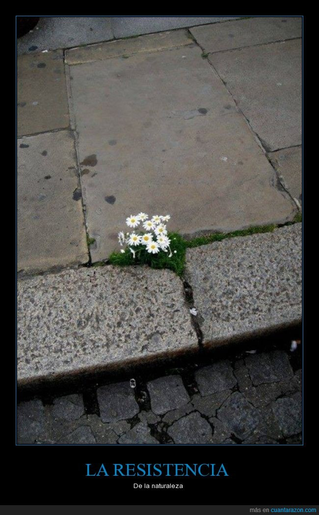 acera,calle,cemento,crecer,flores,naturaleza,pavimento