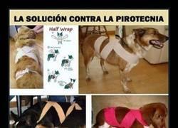 Enlace a Un truquito para que los perretes no tengan tanto miedo :)