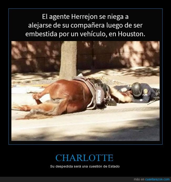 Accidente,Agente Herrejon,Charlotte,Despedida,Houston,Yegua