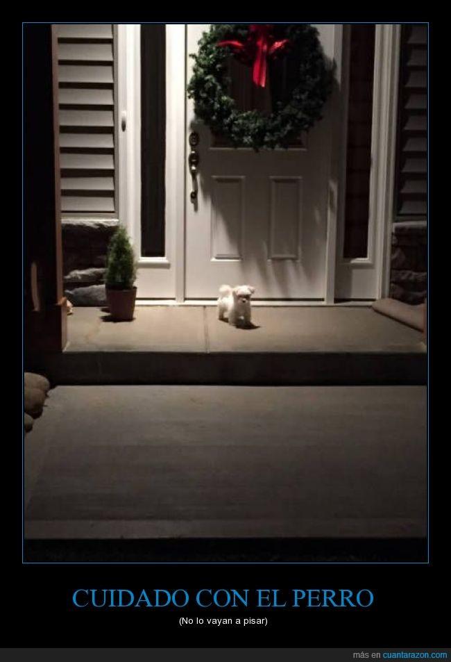 aviso,cachorro,Can,casa,navidad,pequeño,Perro,puerta,ternurita