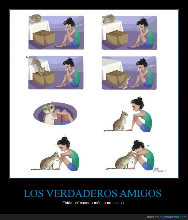 amor,cuidar,gato,llorar,querer,triste