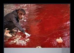 Enlace a Es FLIPANTE la contaminación que sufren en China