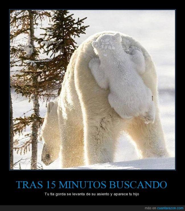 bebé,cría,humor,nieve,osezno,oso,Osos polares,plantígrado