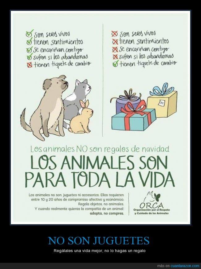 animal,conejo,encariñar,gato,juguete,mascota,perro,producto,sentimiento