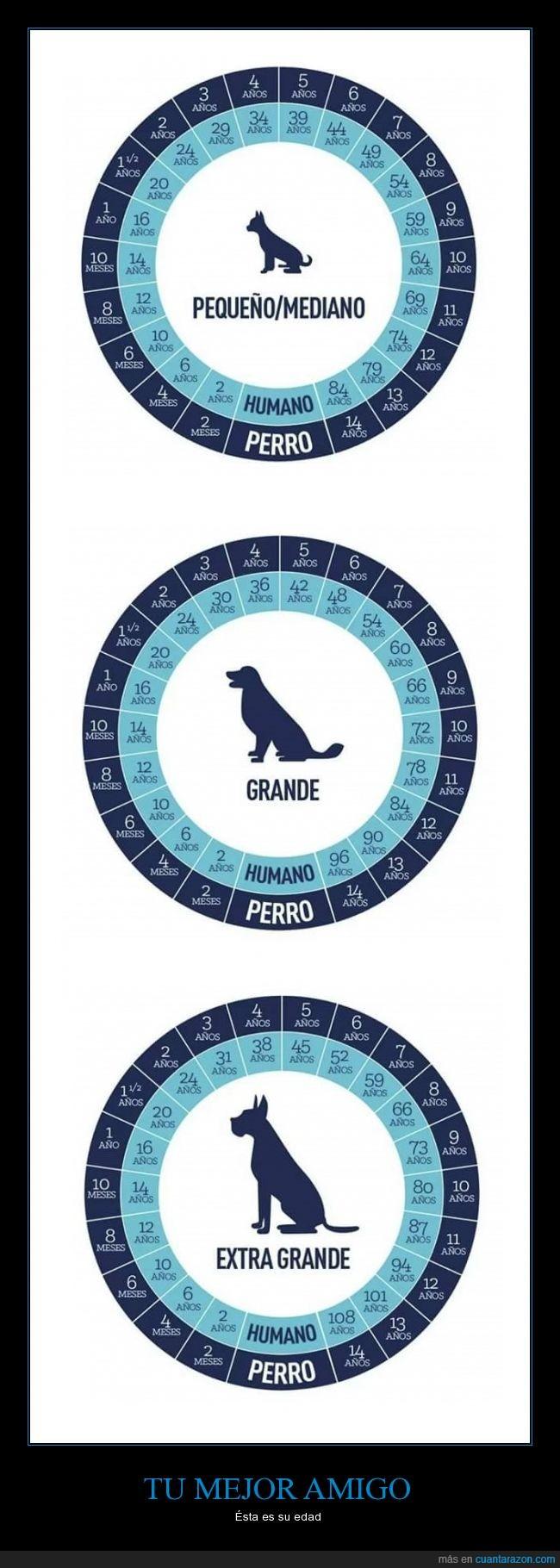 Amigo,Año,Años,Dog,Edad,Humano,Mascota,Old,Perro