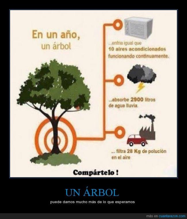 acondicionado,aire,ambiente,año,arbol,auto,beneficio,litros,lluvia,medio,rama