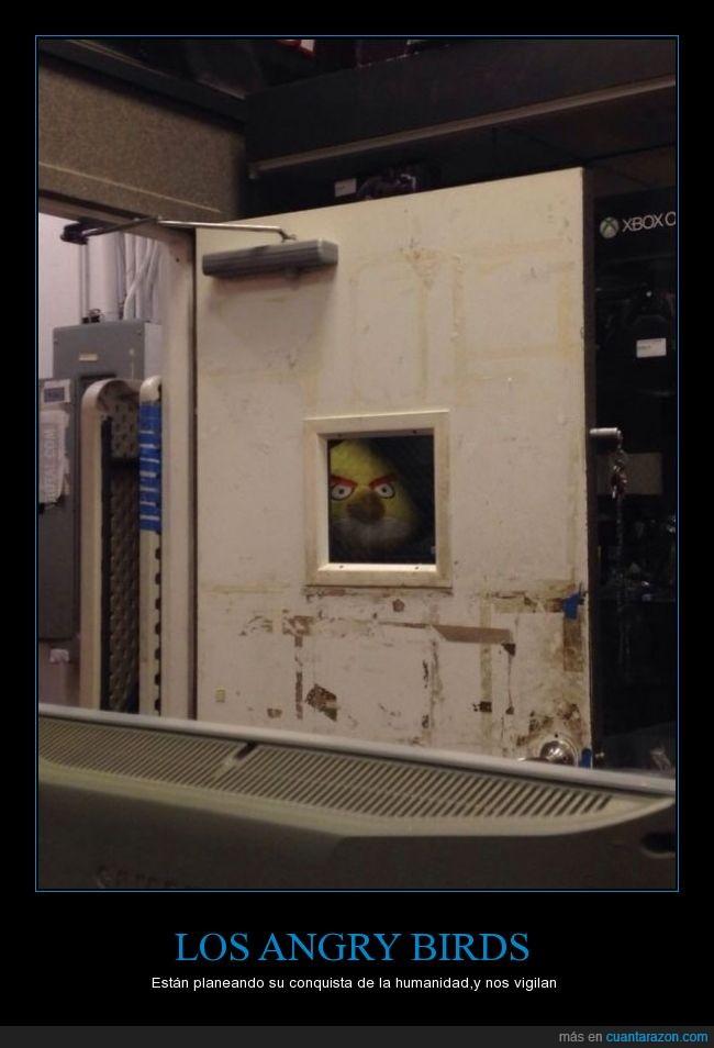 Angry Birds,miedo,mirar,puerta,Sacado de VRUTAL,trabajo,ventana,vigilar