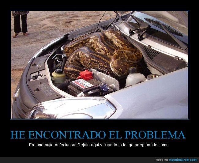 avería,bujia,coche,mecanico,motor,sepiente