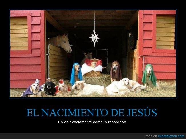 belén,caballo,chihuahua,jesus,labrador,navidad,perro