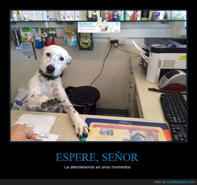 atender,escritorio,espere,perro,que mono,señor