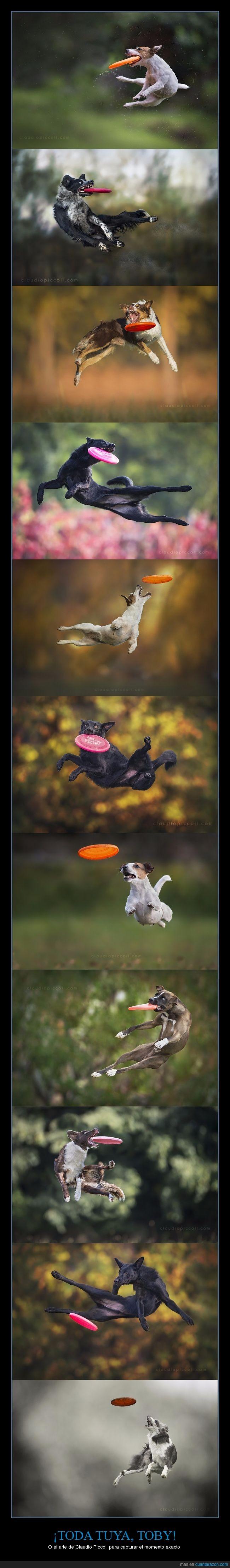 coger,derp,frisbee,momento,perro,saltar,salto