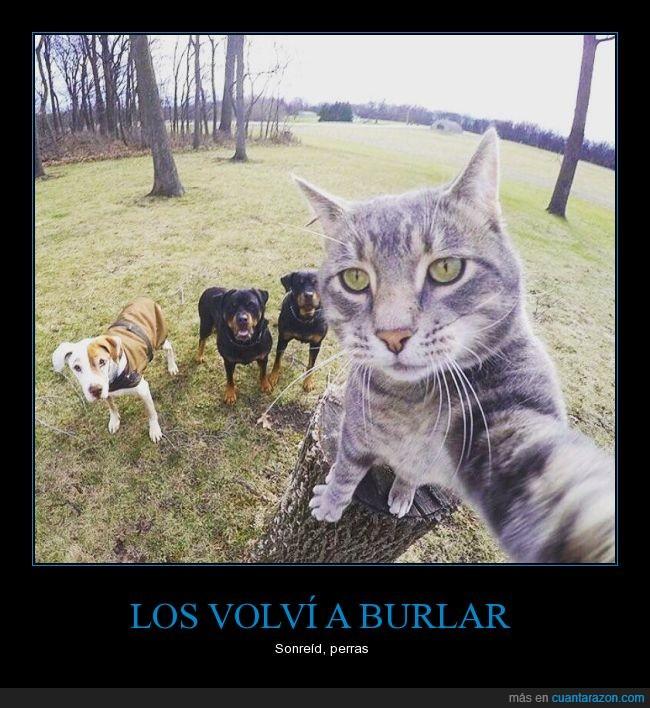 can,escapar,felido,felino,gato,huir,perro,rama,selfie