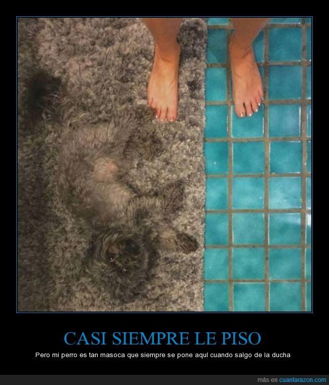 alfombra,camuflado,ducha,gris,pelo,perro,pisar