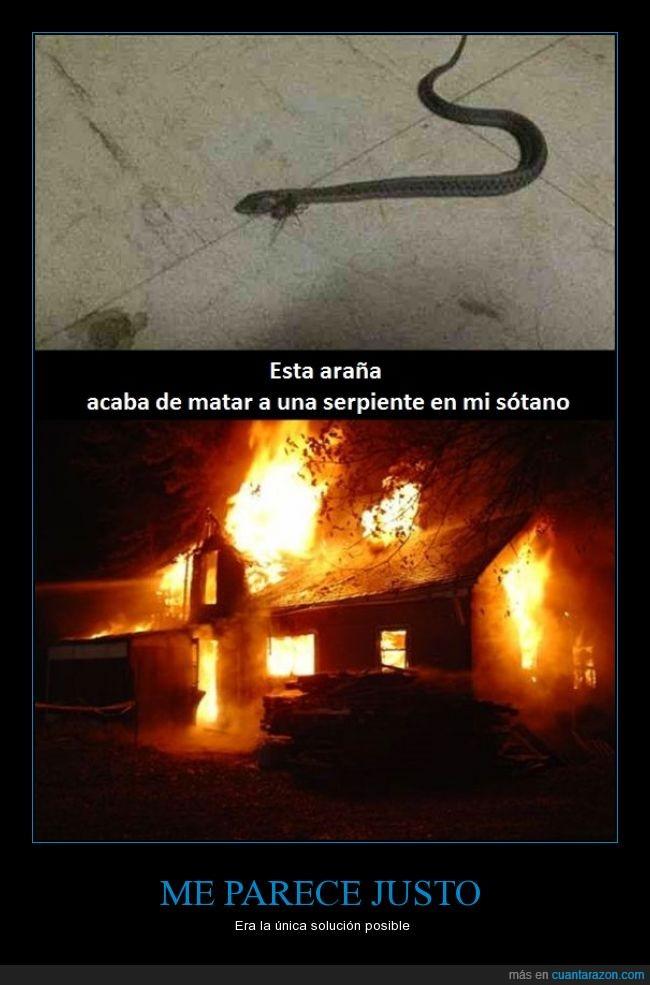 araña,fuego,incendio,justo,matar,quemar,serpiente,sota,sótano