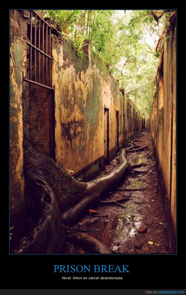 ahora abierta al público,árbol,Guayana Francesa,Isla San José,prisión abandonada