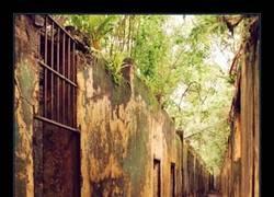 Enlace a Un árbol creciendo en la prisión abandonada de la Isla San José