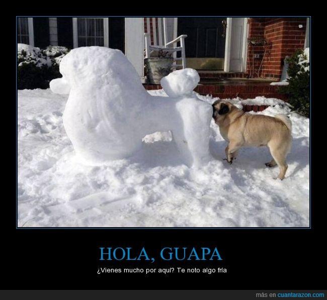 atras,caniche,carlino,frio,muñeco,nieve,oler,perro,pug