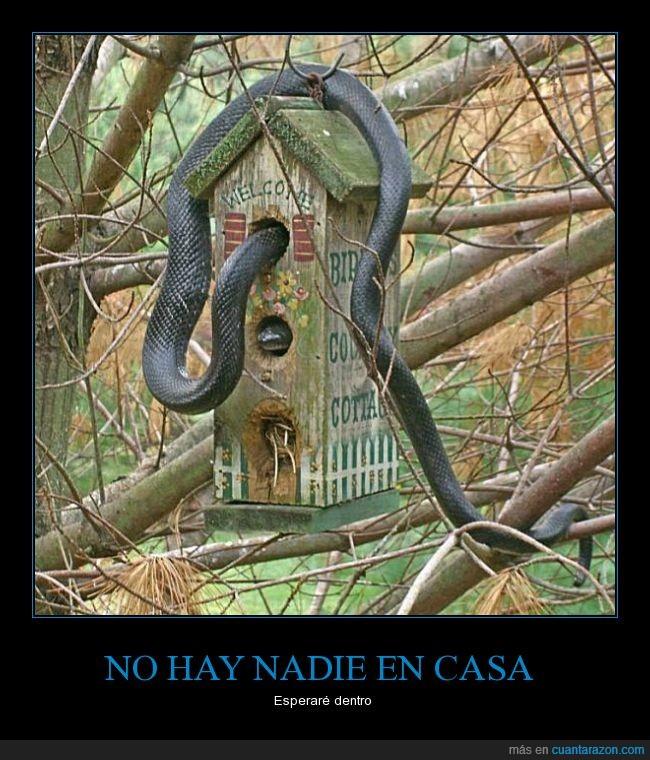 árbol,casa,casita,dentro,esperar,nido,pájaro,serpierte,Tumblr,volver