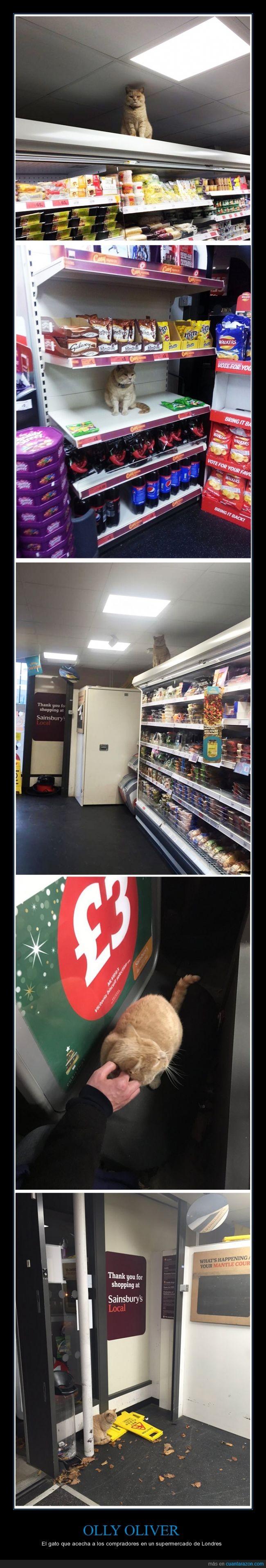 es un gato muy gordo,foto,gato,Olly Oliver,realidad,Sainsbury,supermercado