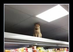 Enlace a Olly Oliver, el gato gordaco