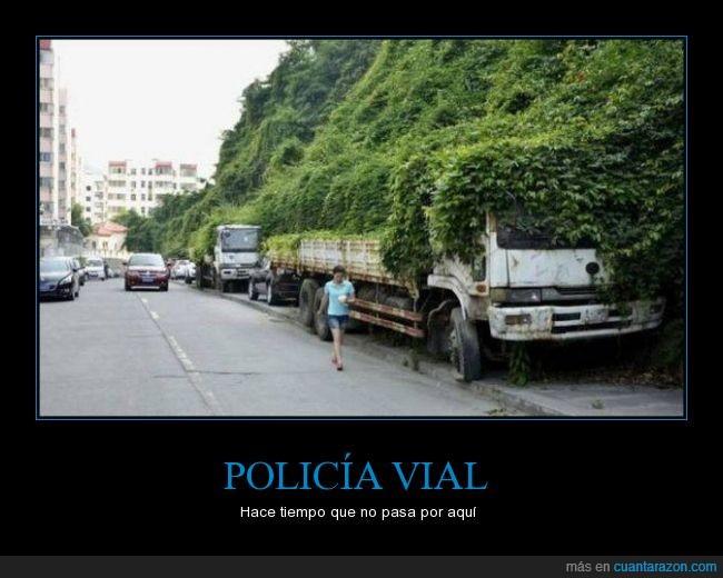 aparcado,camion,carretera,coche,crecer,furgoneta,hiedra,planta,policia,vegetacion,vial