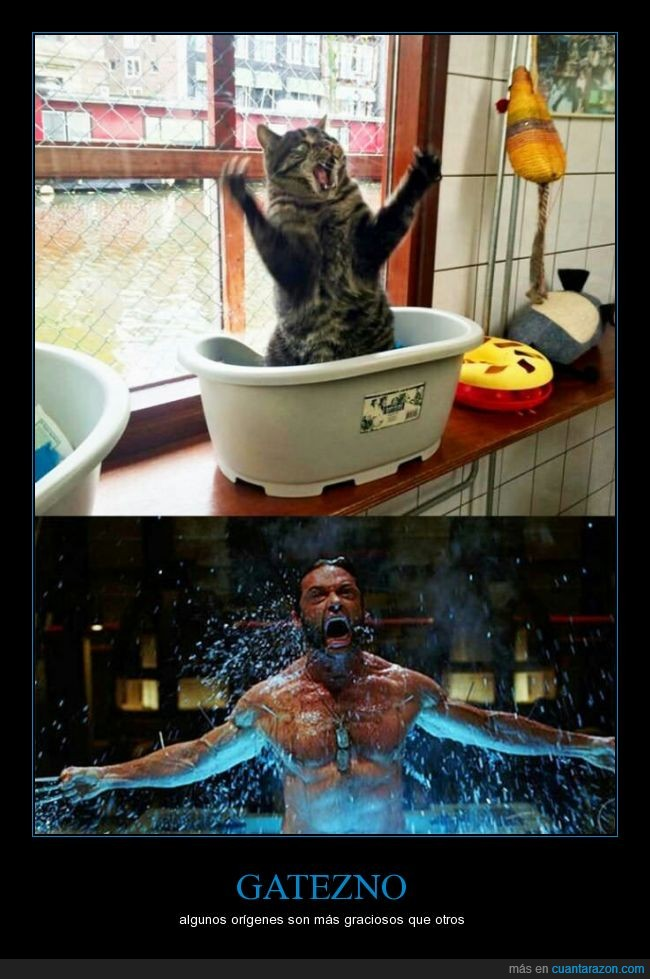 adamantium,agua,bañera,garras,gato,gesto,lobezno,origen,salir