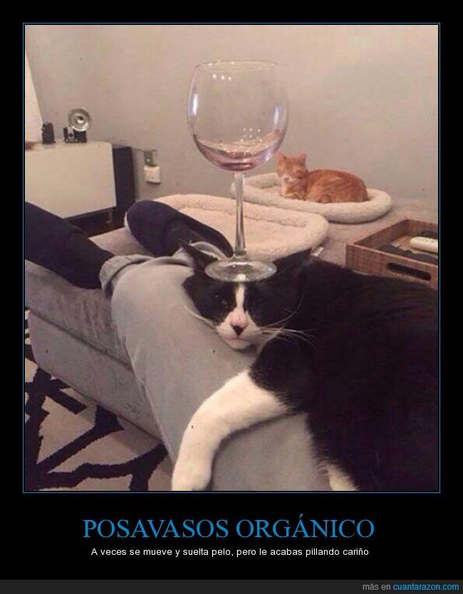 cabeza,copa,dormido,dormir,equilibrio,gato,quieto,vino