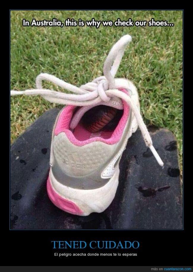 bamba,calor,calzado,deportiva,miedo,serpiente,tenis,zaparilla,zapato