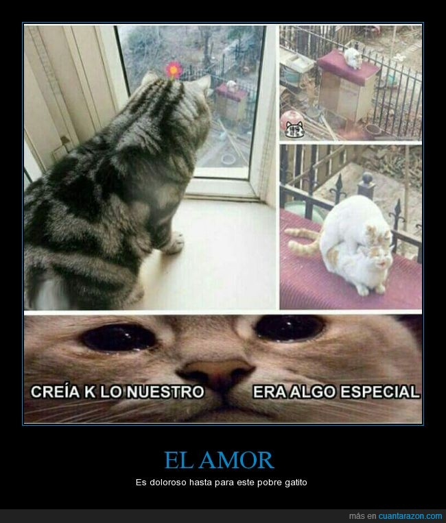 amor,cuernos,especial,gata,Gato,infiel