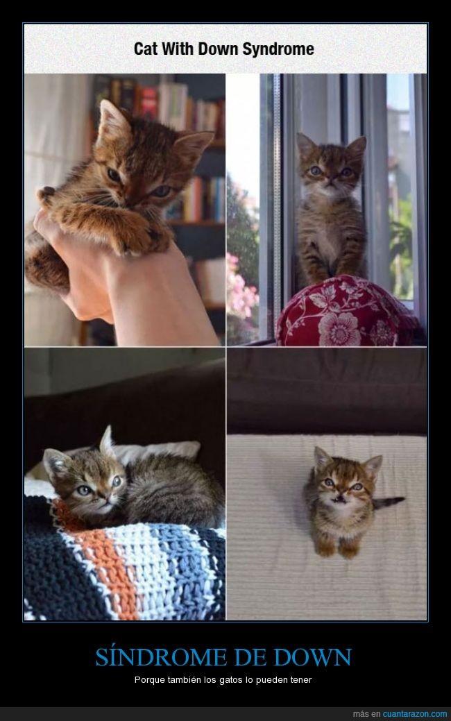 gato,ojos,sindrome de down