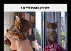 Enlace a ¿Existen los gatos con ''síndrome de Down''?