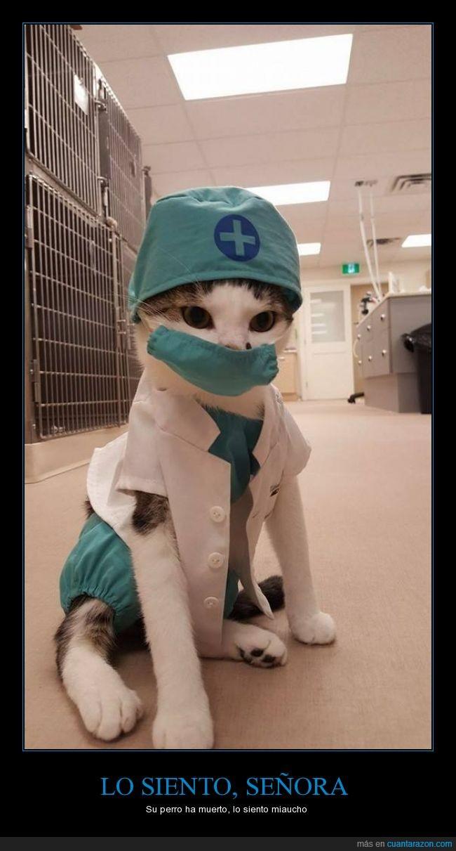 curar,disfraz,gato,medico,perro,señora,siento,veterinario