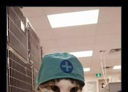 Enlace a El gato veterinario al rescate