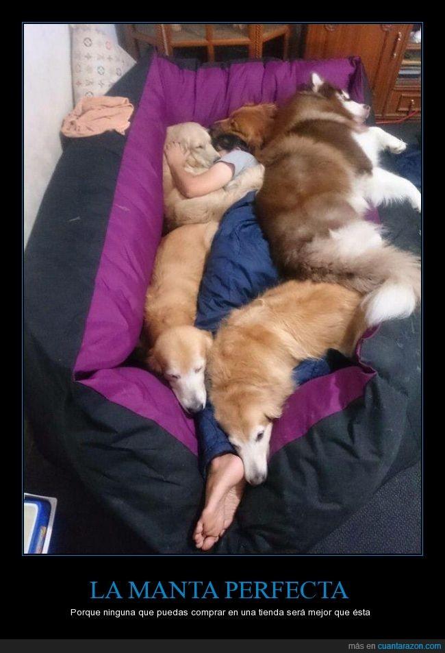calor,cama,canes,frio,manta,mujer,perros,protección,sofá