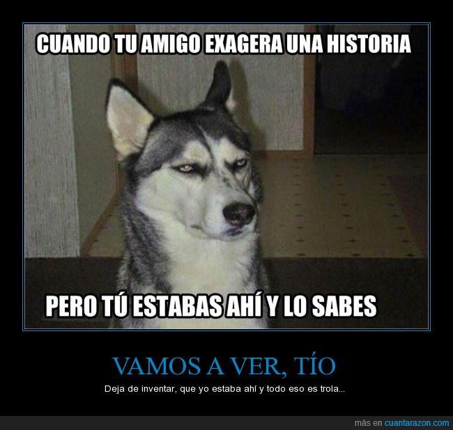 amigo,husky,incredulidad,inventar,perro,siberiano