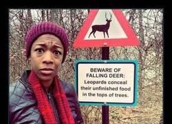 Enlace a Llueven ciervos, lo típico... VALE NO