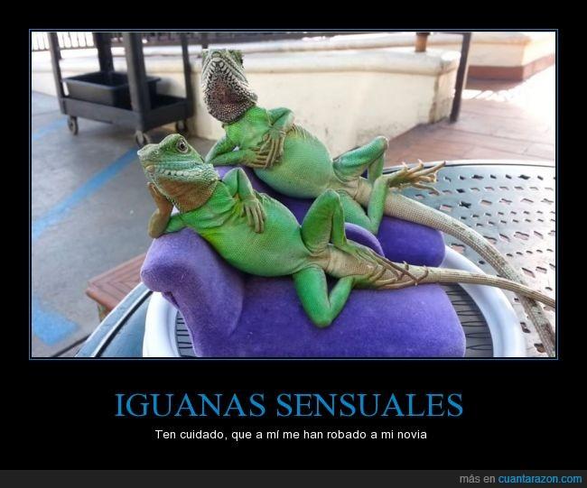 iguanas,me siento atraído por la primera,novia,pose,robar