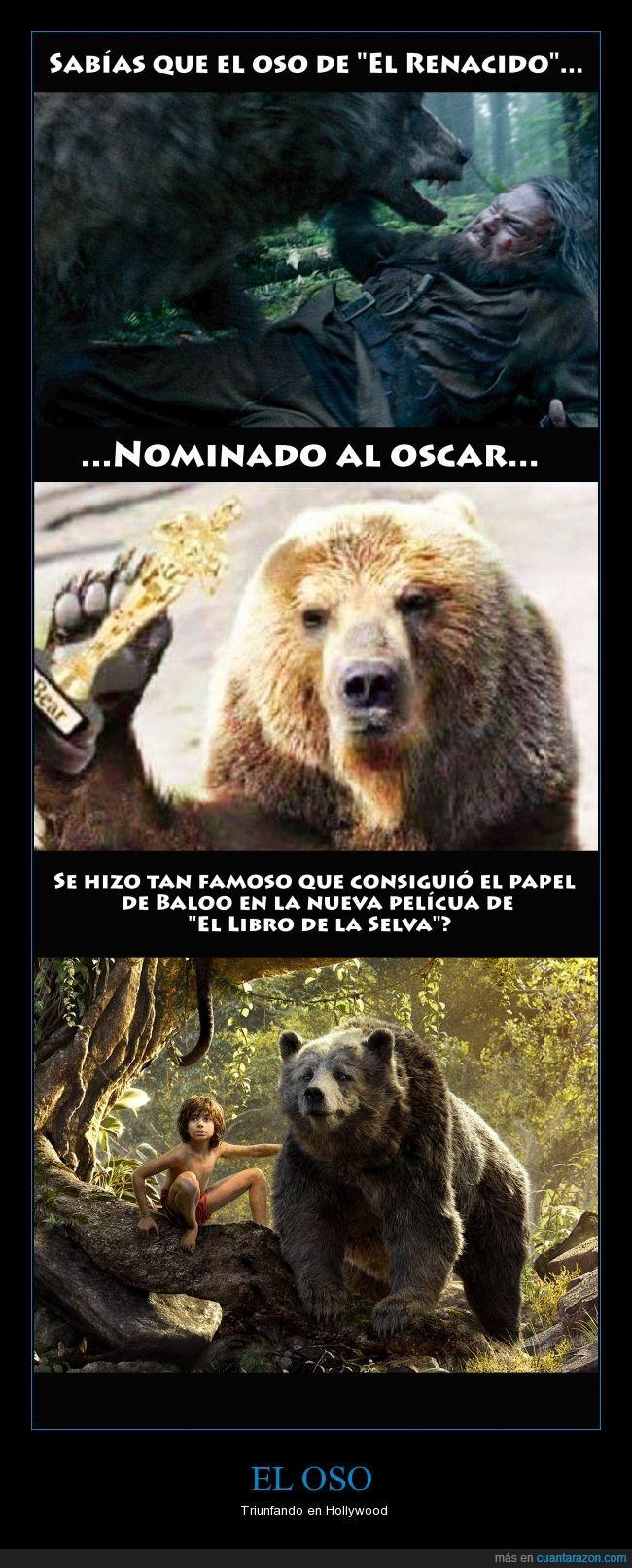 Baloo,El Renacido,Libro de la Selva,Oso