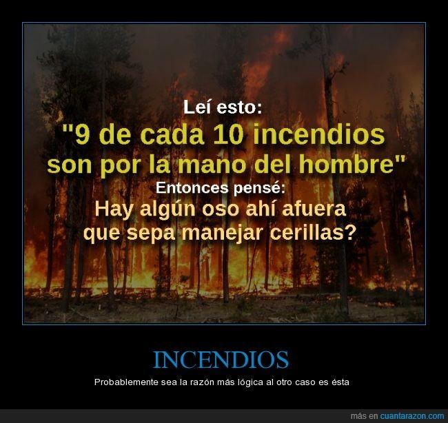 Bosque,caja,cerilllas,Fuego,humano,Humor,Incendio,Oso