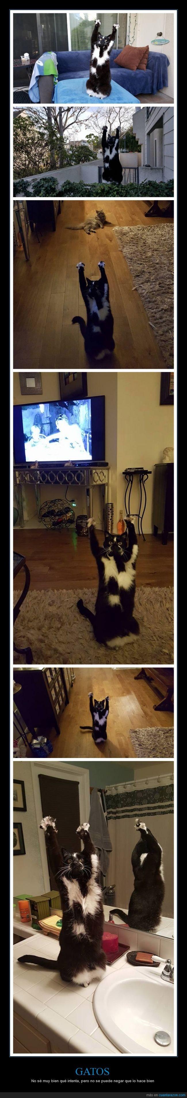 arriba,blanco,cielo,gato,levantar,negro,patas