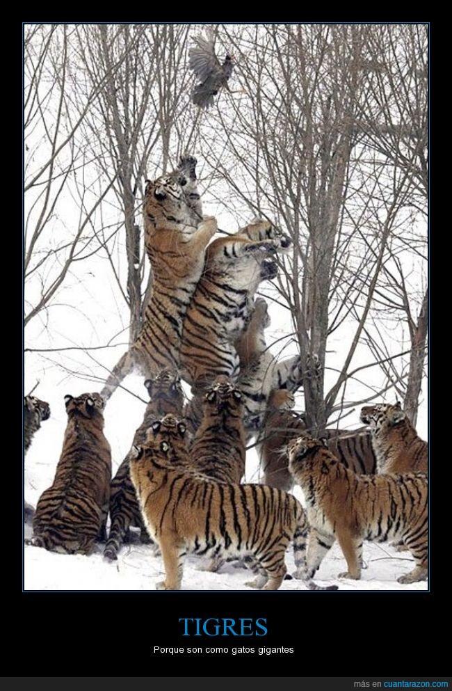 20,ave,gato,gigante,pajaros,pues se van a quedar con hambre,tigre