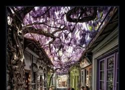 Enlace a Ésta es la que se considera la calle más bonita del mundo