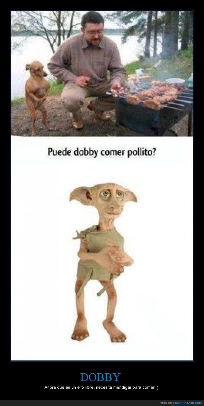 barbacoa,chihuahua,Dobby,elfo doméstico,Harry Potter,libre,perro,pollo
