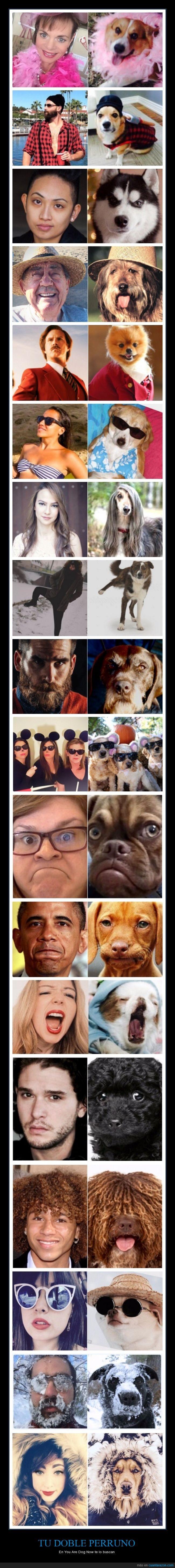 clavado,doble,perro,perruno,you are dog now,youaredognow