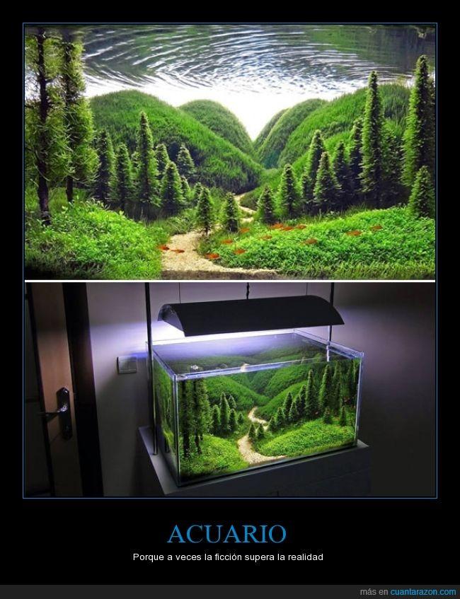 acuario,agua,arboles,grama,paisaje